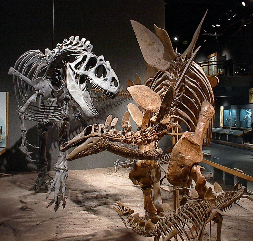 theories for the extinction of dinosaur How did the dinosaurs become extinct this is a question that has stumped scientists ever since dinosaur fossils were first discovered there are many theories as to.
