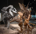 Dinosaur Extinction Theories - Terrestrial and Extraterrestrial