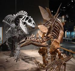 Dinosaur Extinction Theories - Terrestrial and Extraterrestrial