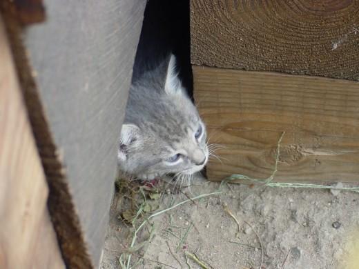 Finding a kitten