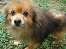 Currently available at Guilford County Animal Shelter, Greensboro, NC 336-297-5020
