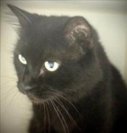 Currently available at Wake County Animal Center, Raleigh, NC 919-212-7387