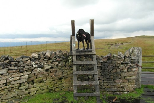 Pendle difficult stile (P3)