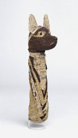 Mummified Jackal at the British Museum