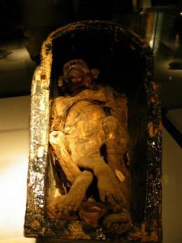 Mummified Baboon