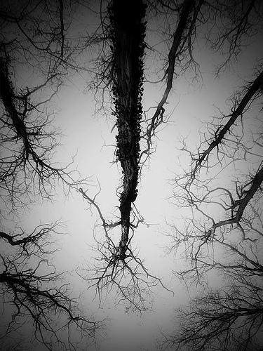Nightmarish trees at night.