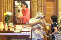 Tribute to Sabrina Yeap, the Mother Teresa of Animals