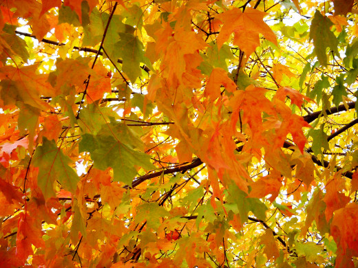 Trees take well when planted in the fall, and the benefits of beautiful foliage abound