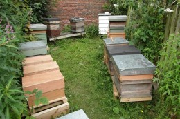 Bee hives at Offshoots, Townley Park