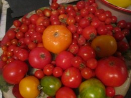 Different kinds and types of tomatoes I collected one summer.