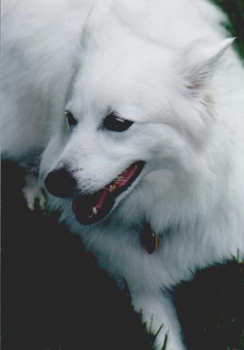 Laika, the cat poo eater