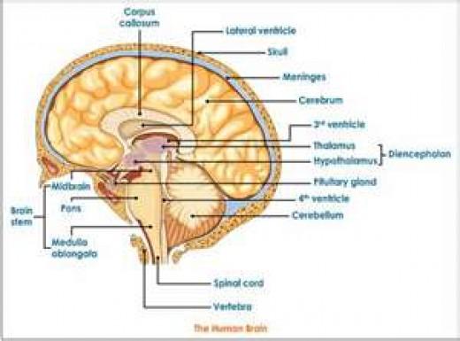 It's the human brain
