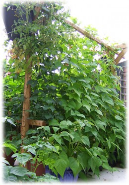 How To Build A Vertical Vegetable GardenDengarden