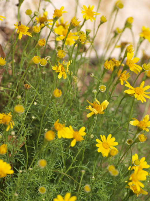 For your school's gardens, select native plants, which need little or no irrigation.