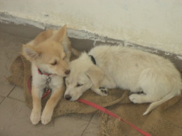 Left to Right: Goldy and Snowy 2