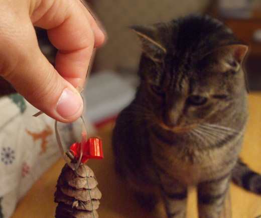 """I think that my cat is saying """"It doesn't look like food, but maybe I'd better check."""""""