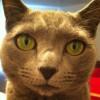 darcig profile image