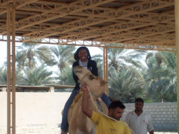 Camel Farm in Kingdom of Bahrain, Manama (Janabiya)