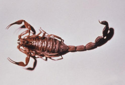 Scorpions are found in the desert Southwest.