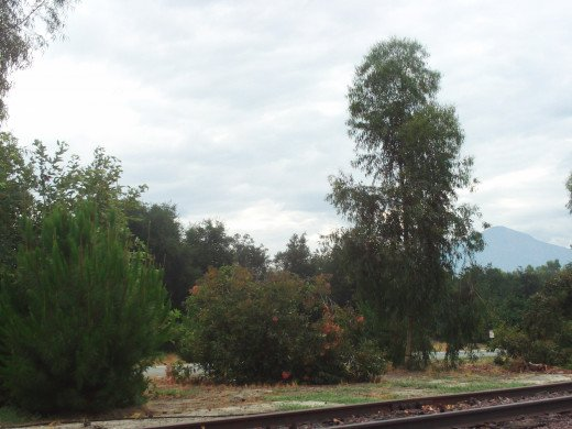 The cloudy sky and trees near the abandoned railroad tracks.