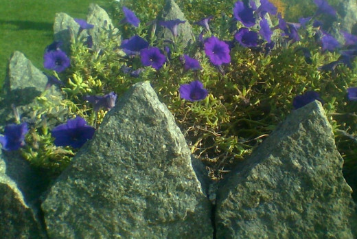 "A stone turret at the ""Castle in the Clouds"" (NH), used as a planter for purple flowers"