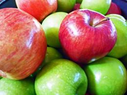 Fresh, bountiful crop of apples