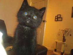 Pepper The Ninja Cat