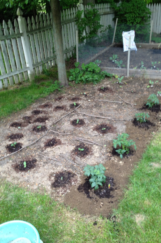 My Vegetable garden in early May 2012