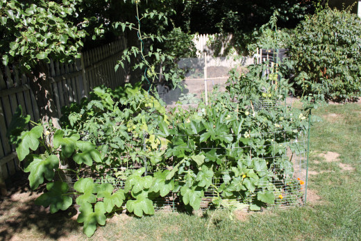 My Vegetable Garden at the end of July 2012