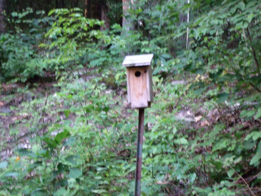 Bluebird House on Metal Pole Inside Garden Enclosure.