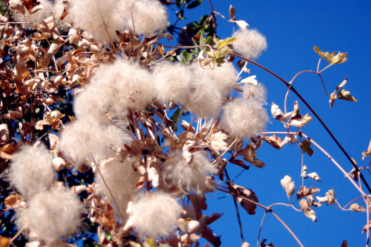 Cotton is one of several sustainable fibers; it's fast and easy to grow.