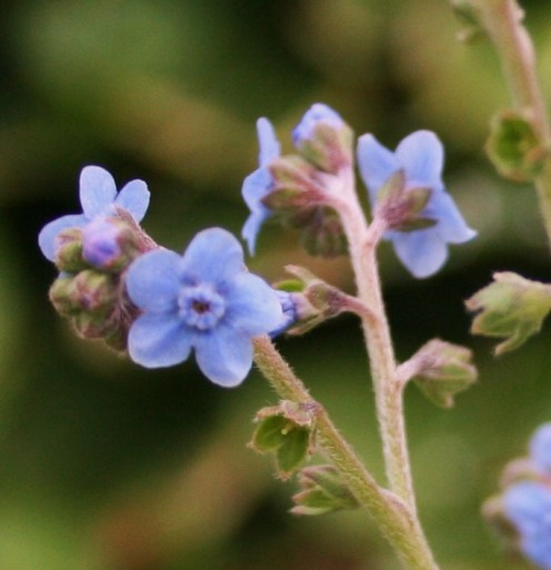 "Note to self: ""Forget me not"" to work in the garden (at least a little bit!) this winter."
