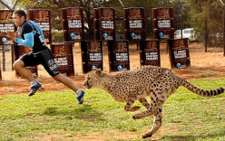 Olympic Athletic Performance for Humans vs Animals - Who would Win?