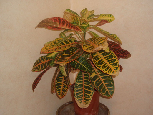 House plants need fertilizers. Outdoor plants can get their nutrients from the soil