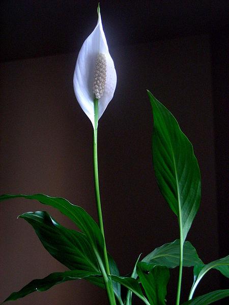 Plants respond well to proper fertilization