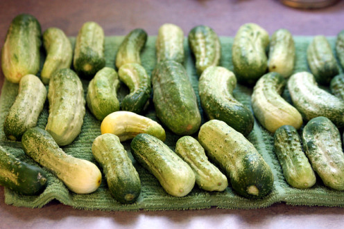 Cucumbers from our garden.