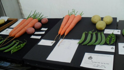 Who can grow the biggest carrot? lettuce? you can judge for your self at the horticultural tent
