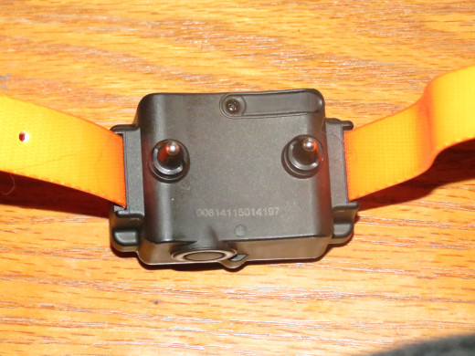 View of back plate and stimulation electrodes. Collar is made of bright orange heavy duty nylon coated with clear rubber.