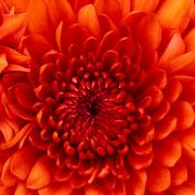 Thallia profile image