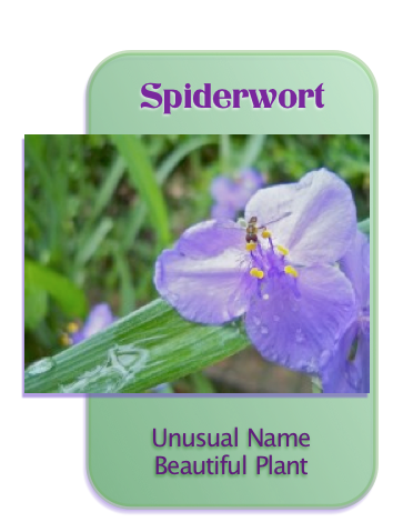 Are you familiar with this bug friendly plant?