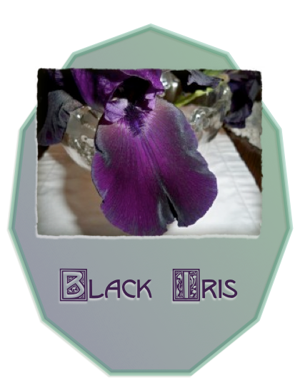 Detail of a black iris petal waiting patiently to be included in a flower arrangement.