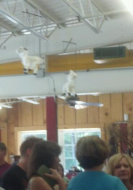 In the deli there is usually a line.  Check out the goat puppets hanging from the ceiling.
