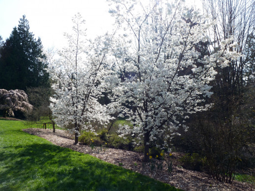 Warm spring day at the University of Washington Arboretum.