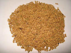 Many Health Benefits of Fenugreek Seeds