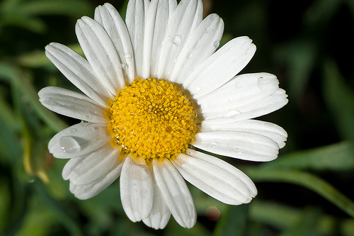 Chamomile tea helps to relieve anxiety