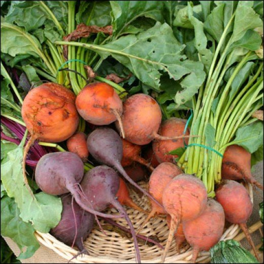 Beets come in different shapes and colors. Here are gold and red glob varieties.