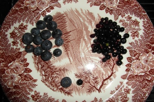 Blueberries and Bilberries (left)                       (right)