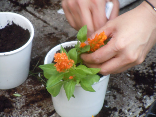 Dig out the boredom away by doing some little gardening.
