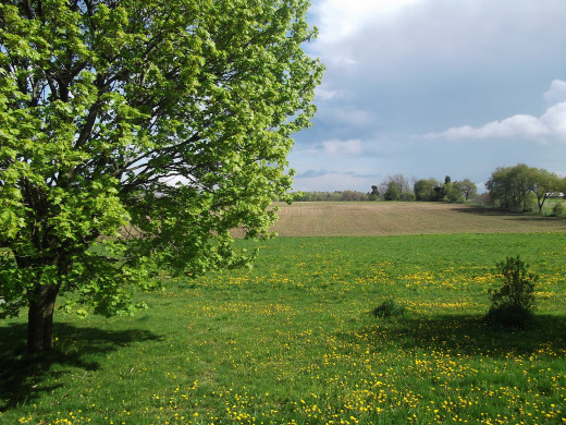Mid-spring in Millbrook, Ontario, Canada.  Photo taken May 20, 2011