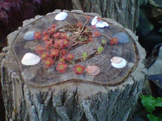 Sedum and seashells